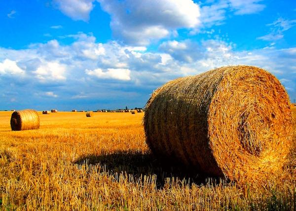 Harvest dating ireland